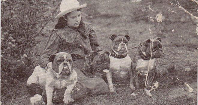 Private: Bulldogs history