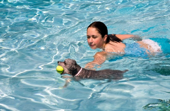 dog-swimming-01