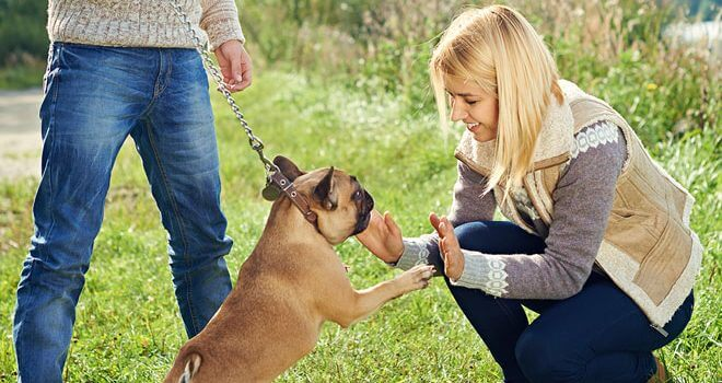 Private: Tips on Training Your Dogs Effectively