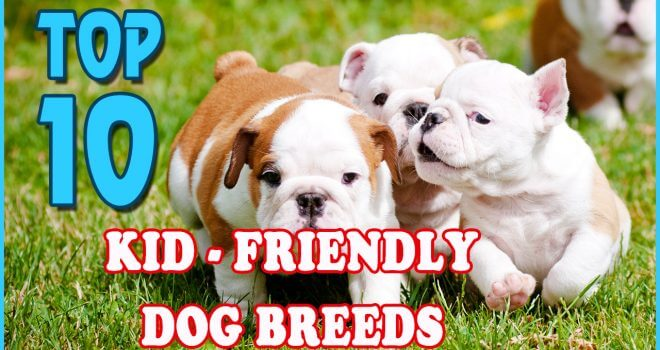Private: Top 10 Friendly Dogs For Kids