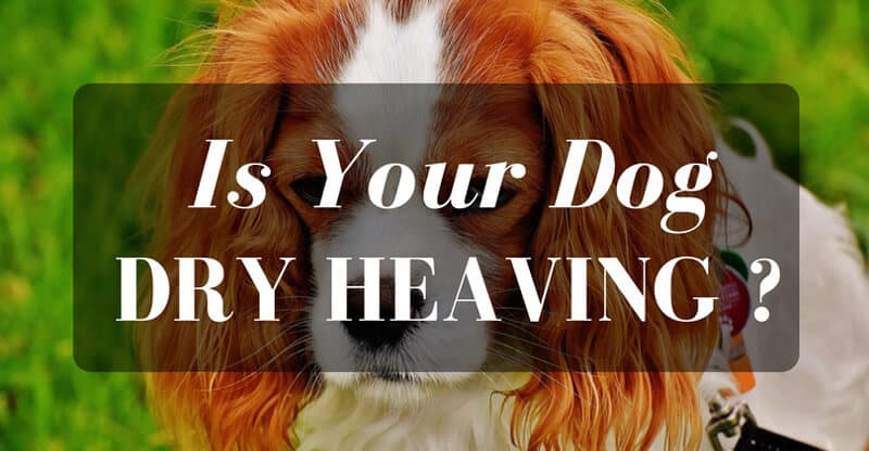 Dog dry heaving - what to do