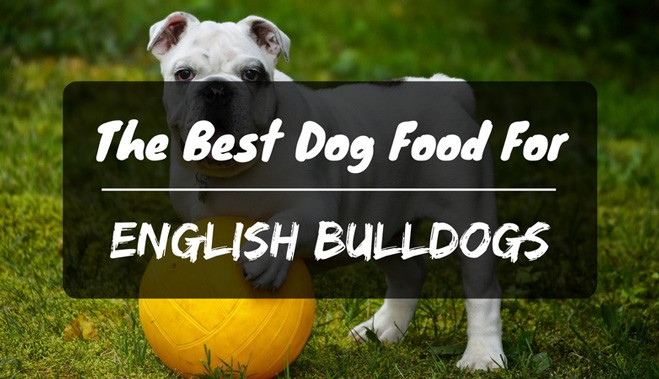 The Best Dog Food For English Bulldogs In 2018 Petdt
