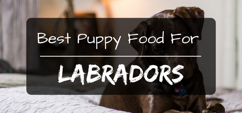 Science Diet Puppy Food Lab