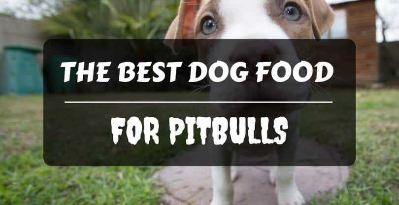 Best Dog Food For Pitbull Adults