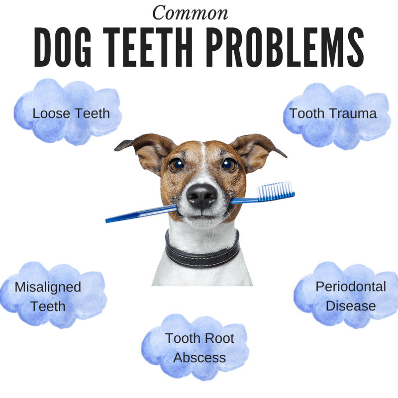 Your Definitive Guide to Taking Care of Your Dog\'s Teeth! - PetDt