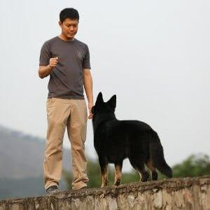hand signals dog training