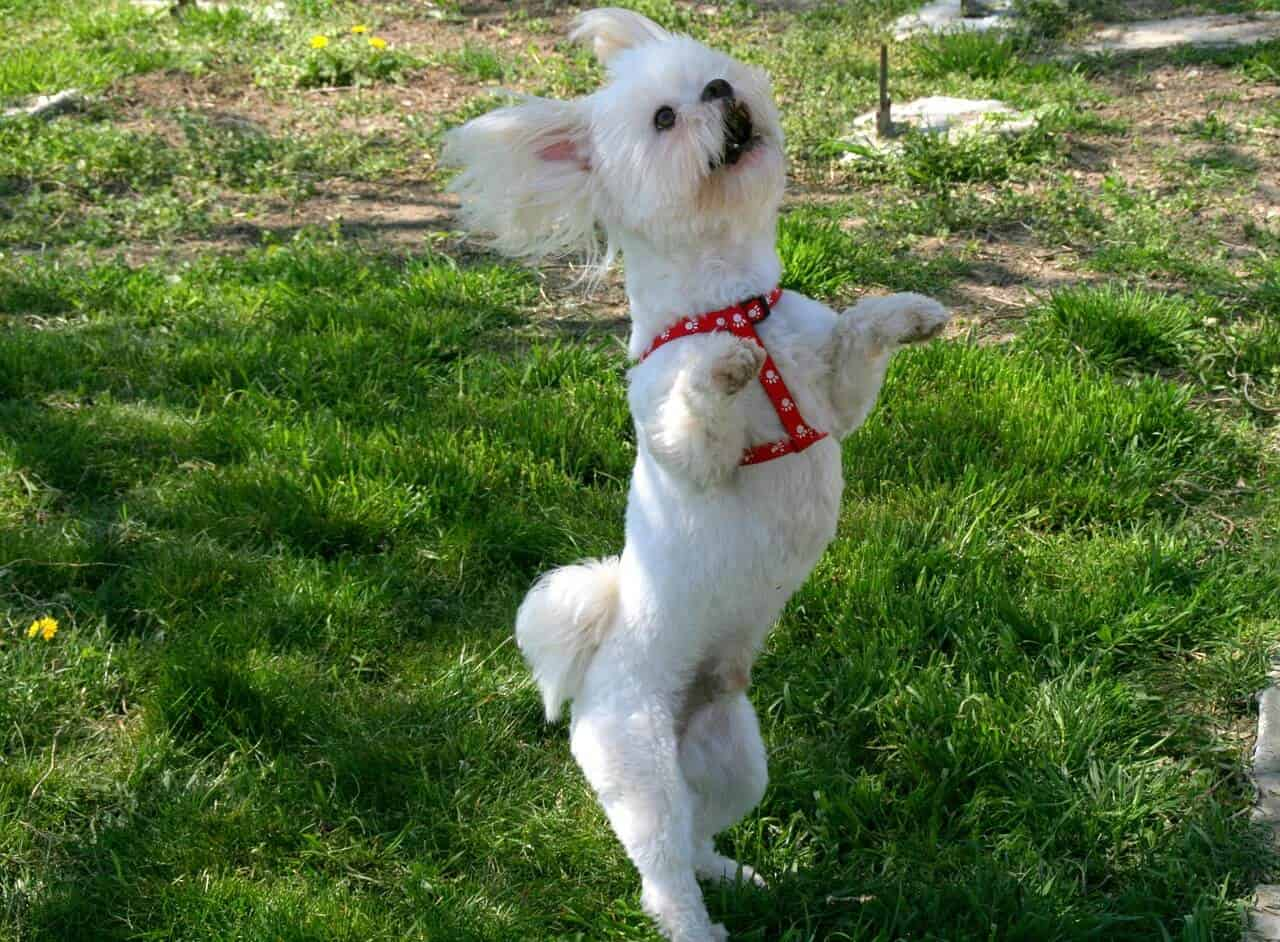 This image has an empty alt attribute; its file name is Dog-dance.jpg
