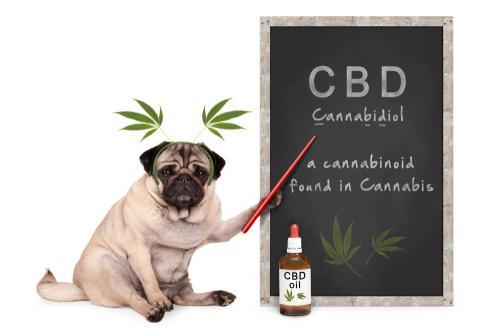 How To Find The Best Coupon Code CBD Hemp Oil Deals For Dog Owners