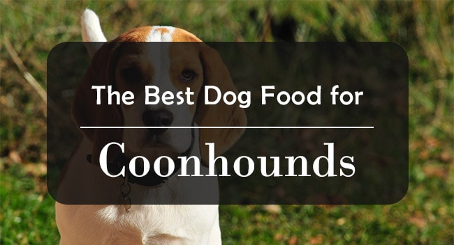 Best Dog Food for Coonhounds