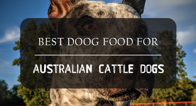 Best Australian Cattle Dog Food Reviewed