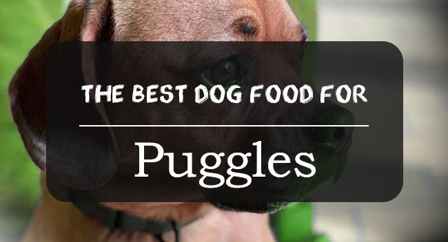 Best dog food for Puggles