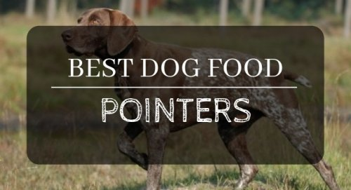 Best dog food for Pointers reviews and ratings