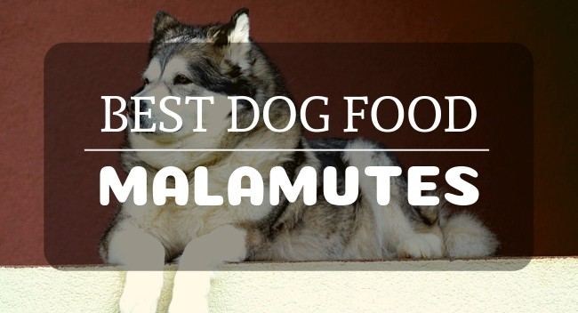 Best Dog Food For Malamutes A Complete Guide Petdt