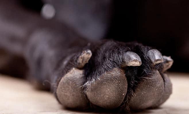 Remember dog paw print