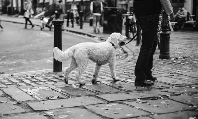 Remember dog walks