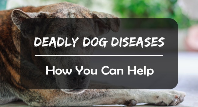 Deadly dog diseases and how you can help