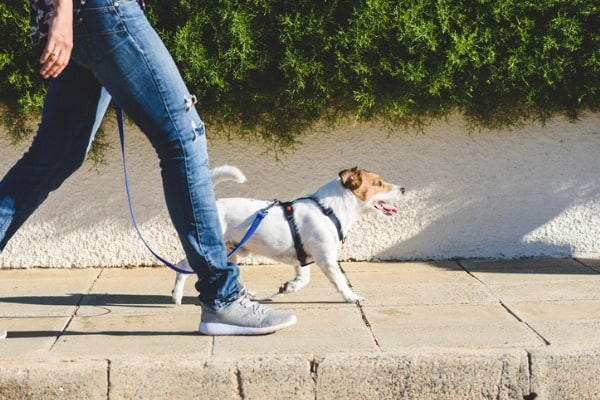a walk with dog