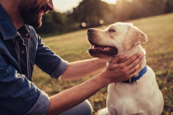 caring for you dogs health