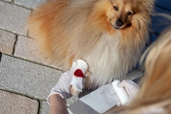 bleeding paw