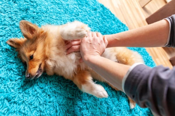 what can I give my dog for gas pain