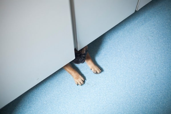 dogs behind closed doors