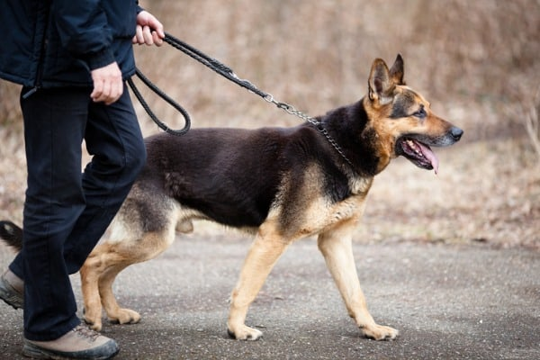 walk sessions for senior canines