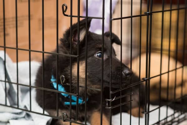 crated puppy
