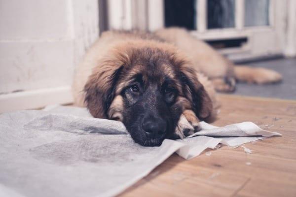 dog marking the territory