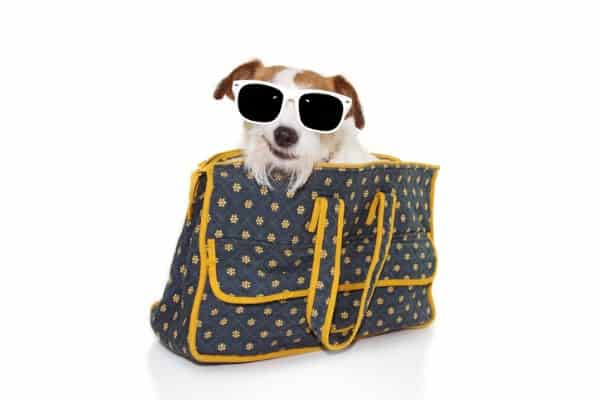 features of pet stylish carrier