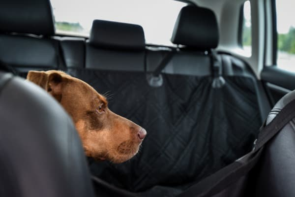 pet-friendly seat covers