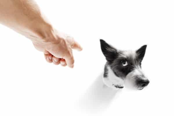 punish dog