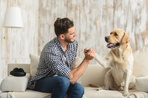 correcting your dog
