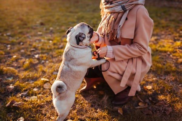 dog climbing you