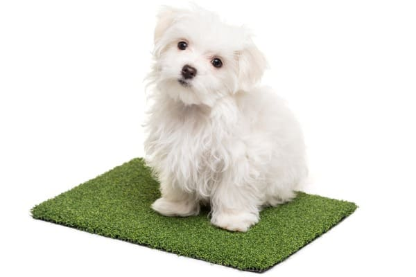 dog sitting on artificial turf pad