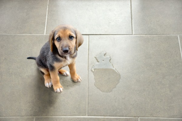 dog peed on tile floor