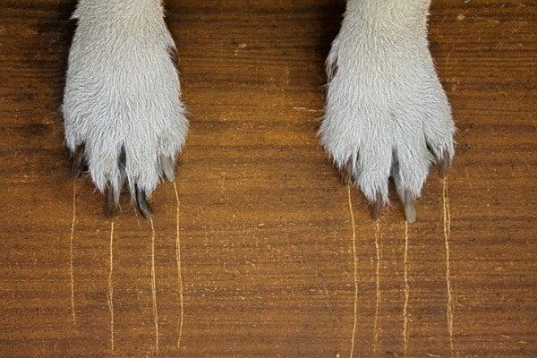 scratches on floor