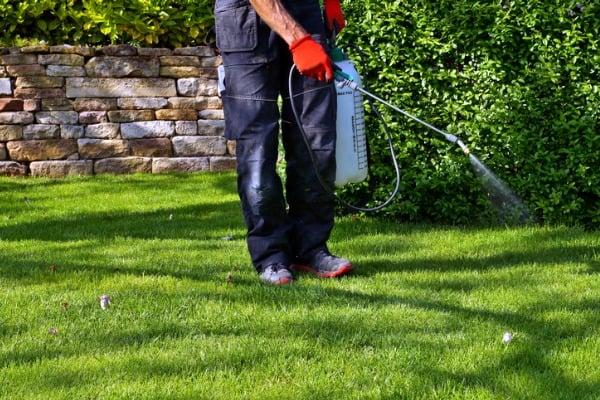 spray the backyard