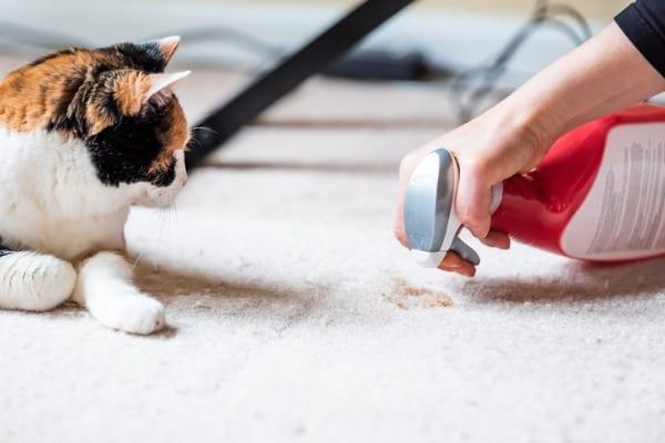 spraying cleaner on cat vomit