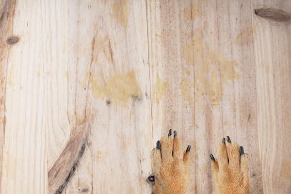 how to get cat urine out of subfloor
