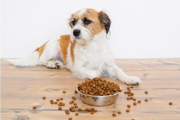 disadvantage of commercial dog food