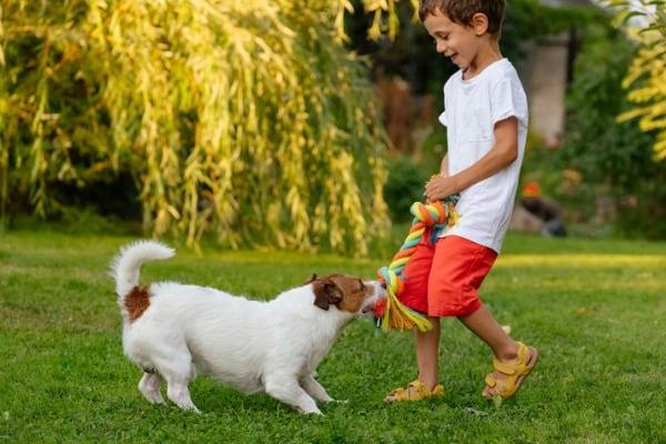 dog playing game of tug