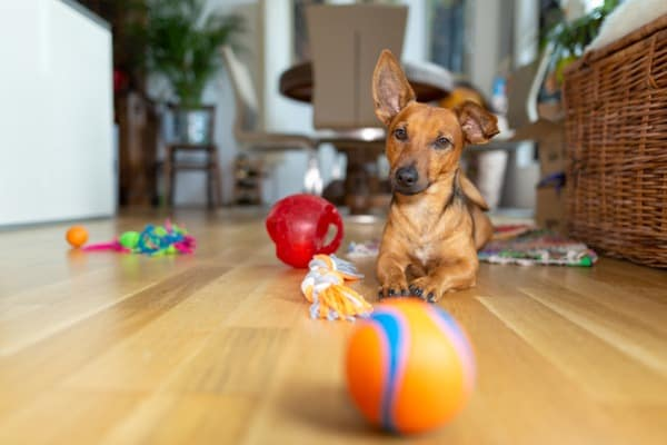 dog playing with his toys