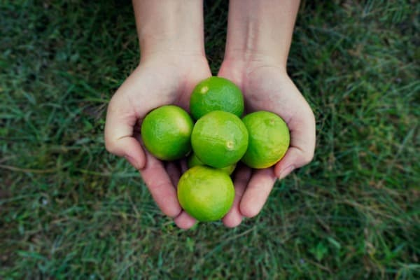 holding limes