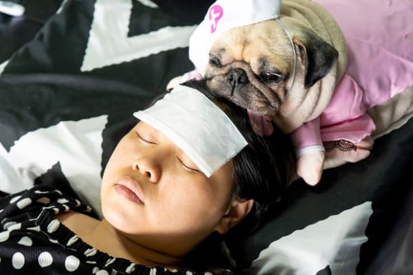pug sleeps woman's head
