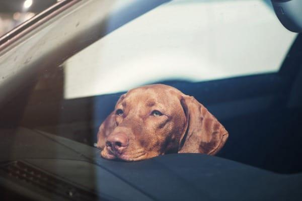 dog's nose sensitive to heat