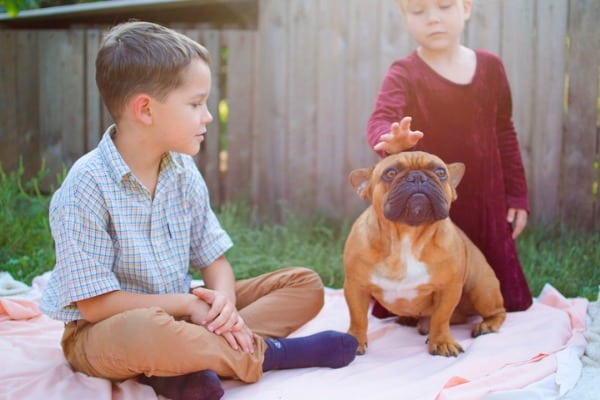 french-bulldog-kids