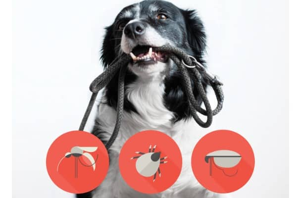 portrait of a dog with icons of parazites around its head black