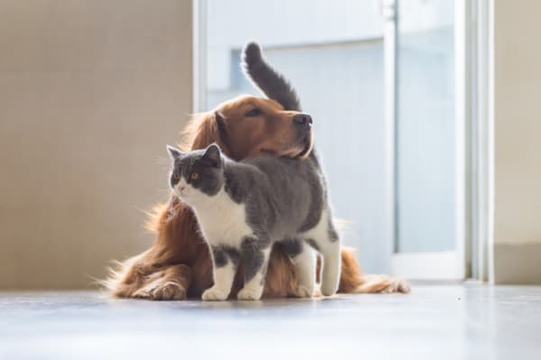 Best friend cat and dog