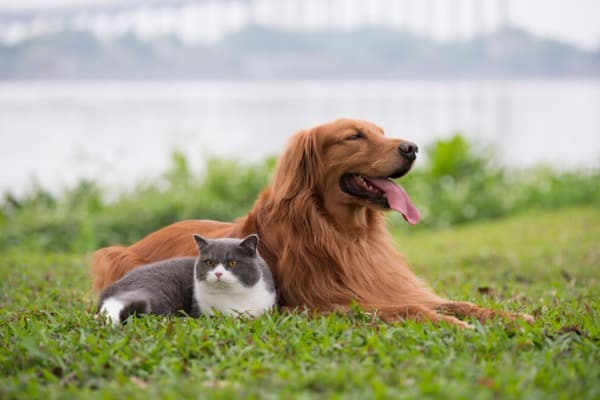 Cat and dog comfortable together
