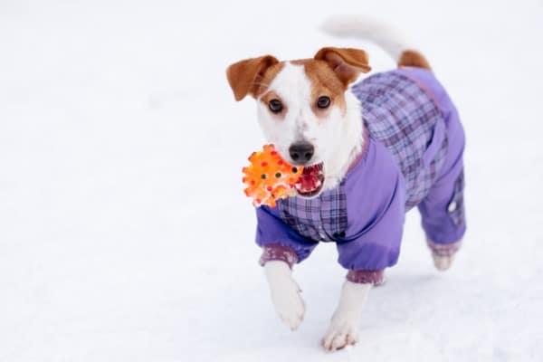 dog-clothing-biz
